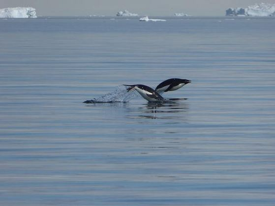Click image for larger version  Name:Penguins.JPG Views:191 Size:31.6 KB ID:101427