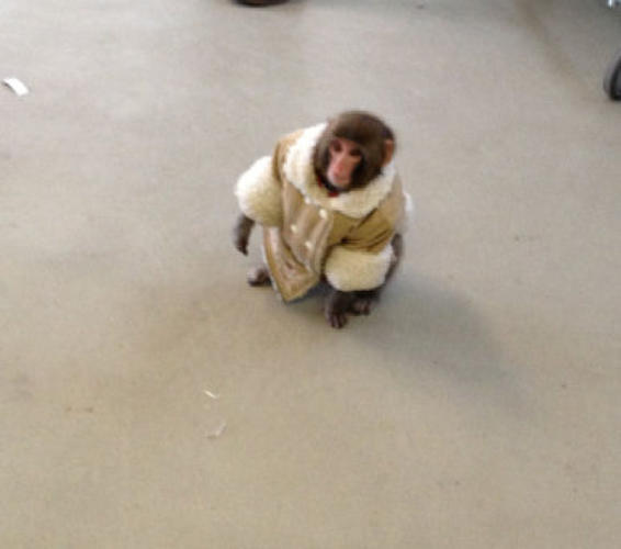 Click image for larger version  Name:ikea monkey.jpg Views:149 Size:19.4 KB ID:104083