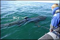 Click image for larger version  Name:GoPro.jpg Views:188 Size:205.1 KB ID:107902