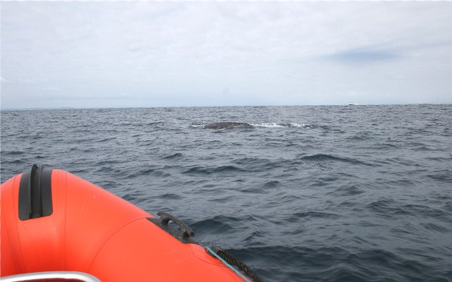 Click image for larger version  Name:whale3.jpg Views:92 Size:63.6 KB ID:10870