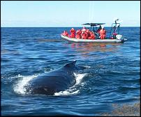 Click image for larger version  Name:srmn whale calf summer 2013.jpg Views:158 Size:285.3 KB ID:112296