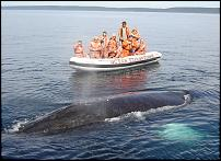 Click image for larger version  Name:close! aug 12 zodiac 2.jpg Views:152 Size:131.6 KB ID:112299