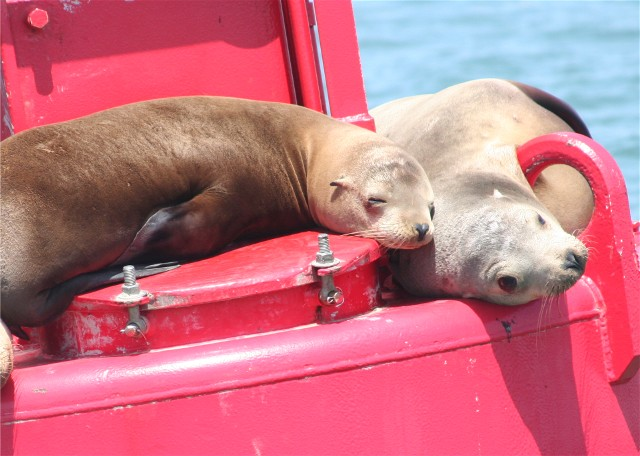 Click image for larger version  Name:seals.jpg Views:167 Size:86.3 KB ID:11388