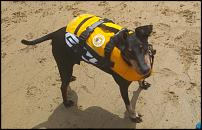 Click image for larger version  Name:Ruffwear.jpg Views:31 Size:121.8 KB ID:137217
