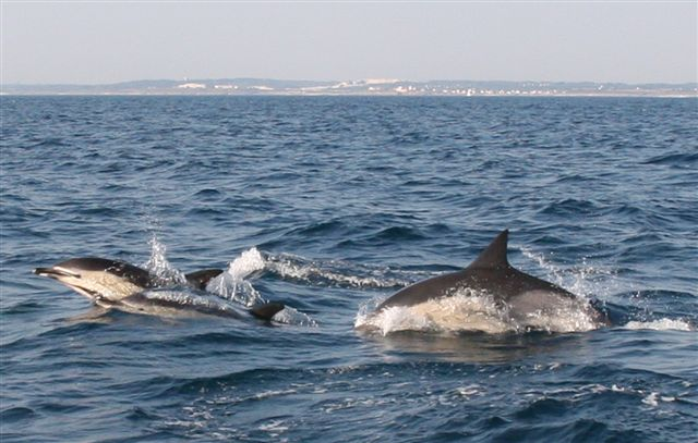Click image for larger version  Name:dauphins.jpg Views:101 Size:62.5 KB ID:13982