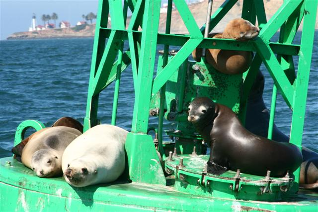 Click image for larger version  Name:sea lion 008 (Small).jpg Views:163 Size:66.9 KB ID:15415