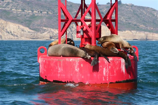Click image for larger version  Name:sea lion 011 (Small).jpg Views:139 Size:66.9 KB ID:15416