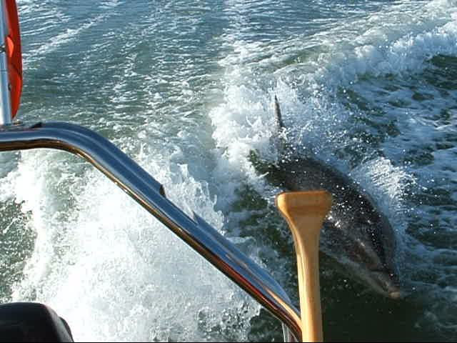 Click image for larger version  Name:flipper.jpg Views:165 Size:59.3 KB ID:16565