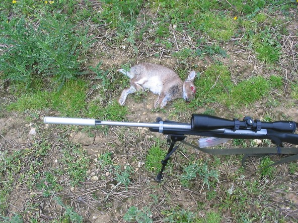 Click image for larger version  Name:Rabbit.jpg Views:142 Size:151.9 KB ID:16619