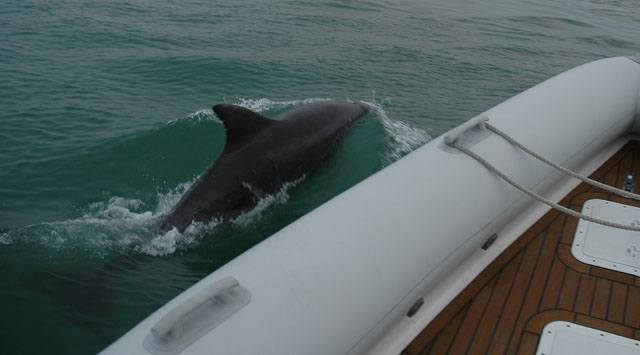 Click image for larger version  Name:Solent Dolphin & Merlin 2005.jpg Views:145 Size:56.1 KB ID:16898