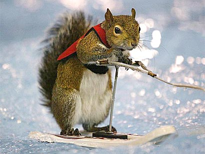 Click image for larger version  Name:squirrel.jpg Views:138 Size:35.6 KB ID:16923
