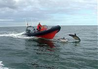 Click image for larger version  Name:7m dolphin.jpg Views:245 Size:69.4 KB ID:17863