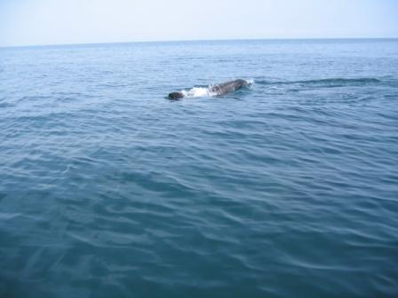 Click image for larger version  Name:dolphins 102.jpg Views:130 Size:18.7 KB ID:20538