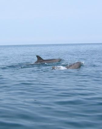 Click image for larger version  Name:dolphins 100.jpg Views:136 Size:14.9 KB ID:20541