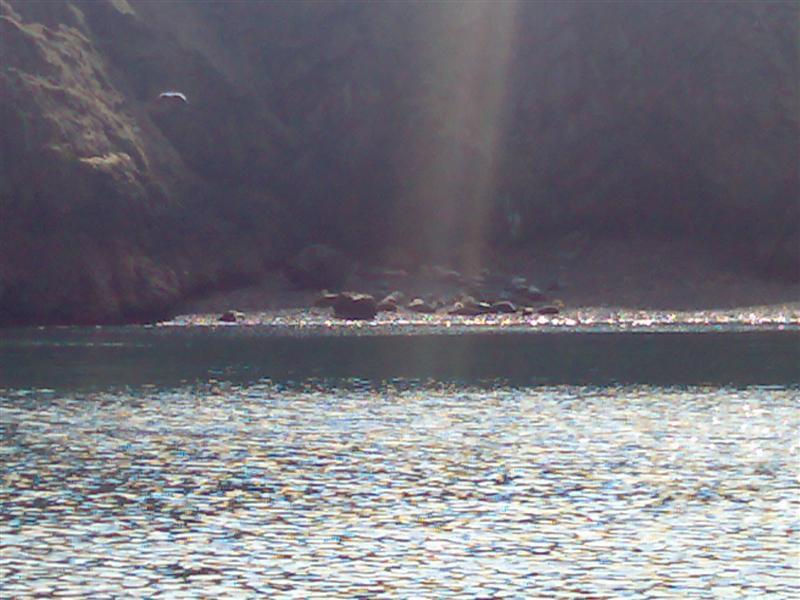 Click image for larger version  Name:Seals on Skomer.jpg Views:120 Size:91.1 KB ID:26037