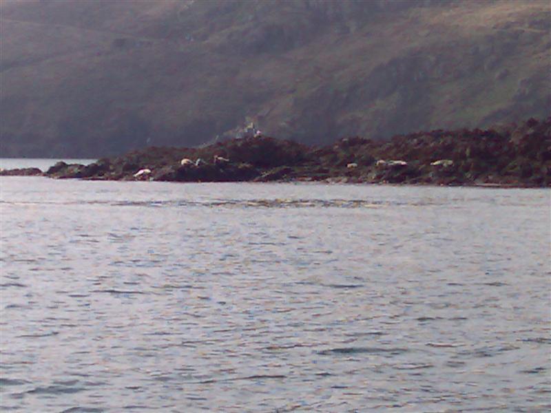 Click image for larger version  Name:Even more Skomer seals.jpg Views:104 Size:78.8 KB ID:26039