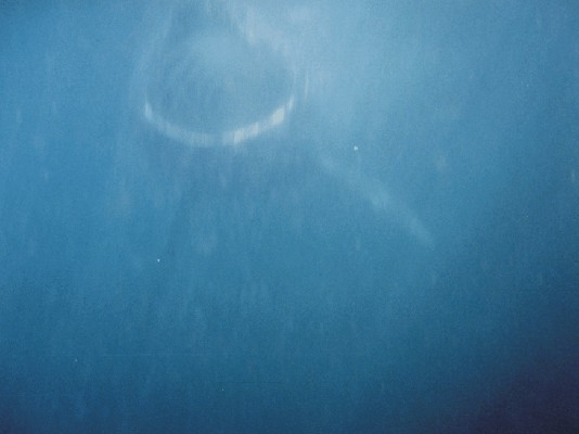 Click image for larger version  Name:shark ribnet 1.jpg Views:798 Size:30.1 KB ID:2901