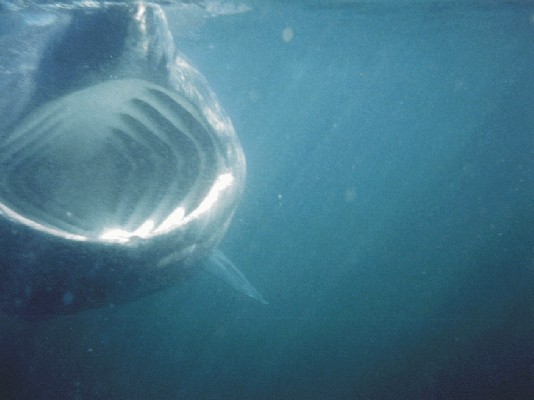 Click image for larger version  Name:shark ribnet 2.jpg Views:793 Size:37.6 KB ID:2902