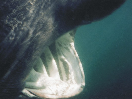 Click image for larger version  Name:shark ribnet 3.jpg Views:788 Size:38.8 KB ID:2903
