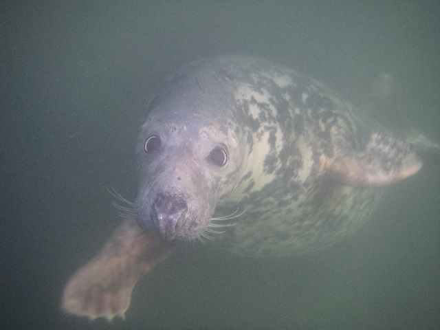 Click image for larger version  Name:7The Seal again.JPG Views:120 Size:142.4 KB ID:29812
