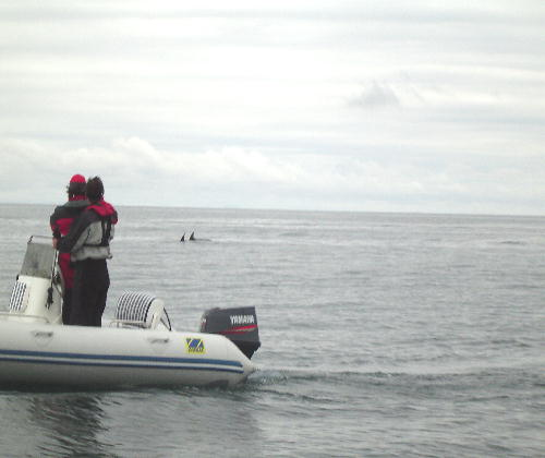 Click image for larger version  Name:meme and phil watch dolphins at abersoch.jpg Views:182 Size:29.1 KB ID:3078
