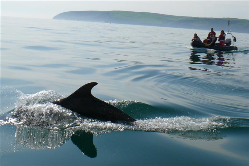 Click image for larger version  Name:Dolphins10.05.08 072 (Medium).jpg Views:153 Size:59.2 KB ID:34748