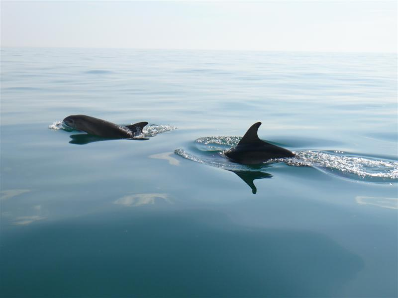 Click image for larger version  Name:Dolphins10.05.08 069 (Medium).jpg Views:229 Size:33.3 KB ID:34752