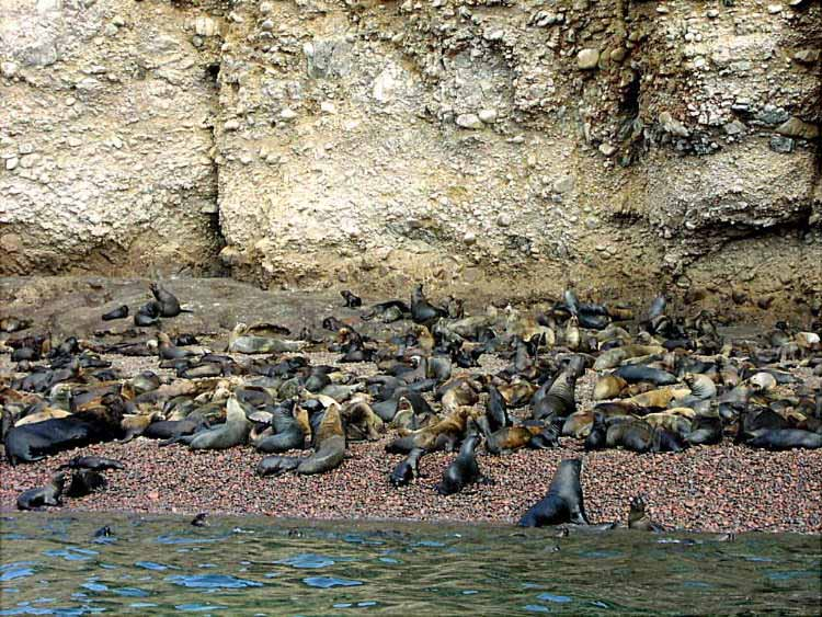 Click image for larger version  Name:Paracas 02.JPG Views:113 Size:103.8 KB ID:35857