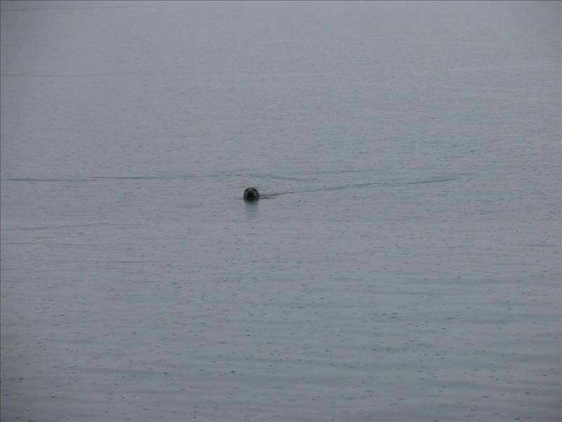 Click image for larger version  Name:Hofn - Vestmannaeyjar 09.jpg Views:73 Size:62.9 KB ID:36149
