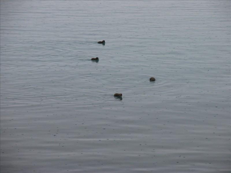 Click image for larger version  Name:Hofn - Vestmannaeyjar 10.jpg Views:96 Size:69.7 KB ID:36150