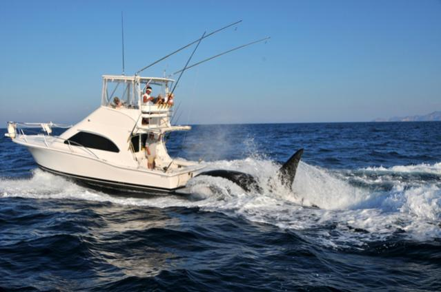 Click image for larger version  Name:orca2wo3.jpg Views:389 Size:37.7 KB ID:39169