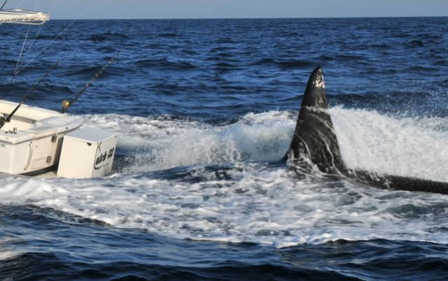 Click image for larger version  Name:orca6mg4.jpg Views:360 Size:47.0 KB ID:39170