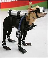 Click image for larger version  Name:Dog diver.jpg Views:160 Size:113.3 KB ID:43966