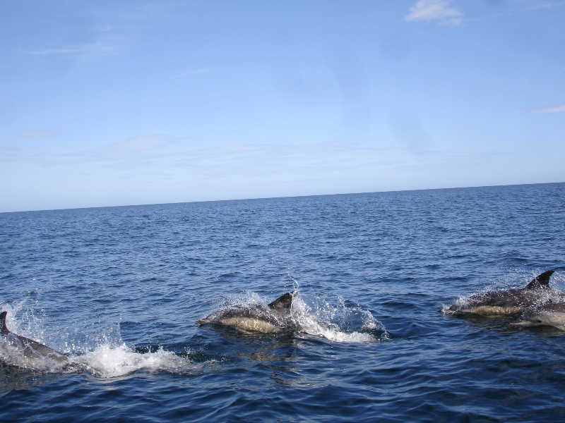 Click image for larger version  Name:dolphin 1.jpg Views:104 Size:223.7 KB ID:44702