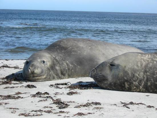 Click image for larger version  Name:ely seals.jpg Views:422 Size:37.5 KB ID:4596
