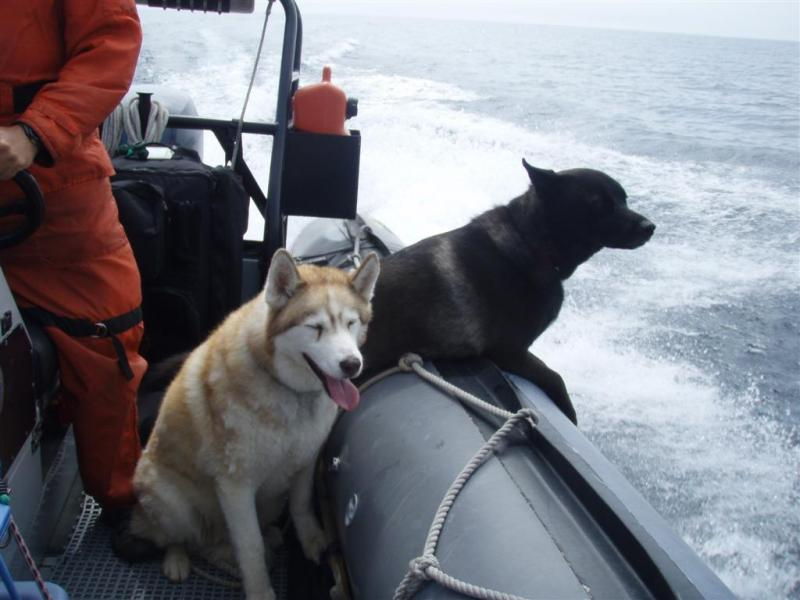 Click image for larger version  Name:Dogs love boats.jpg Views:122 Size:54.4 KB ID:46139