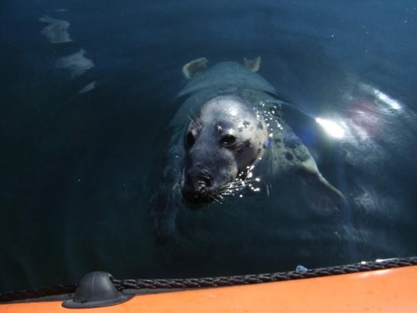 Click image for larger version  Name:seal.jpg Views:134 Size:29.3 KB ID:46257