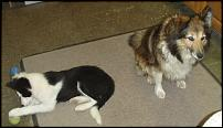 Click image for larger version  Name:pups.jpg Views:147 Size:44.2 KB ID:48790