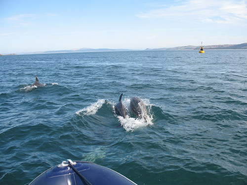Click image for larger version  Name:Gigha Dolphins2.jpg Views:196 Size:108.3 KB ID:50362