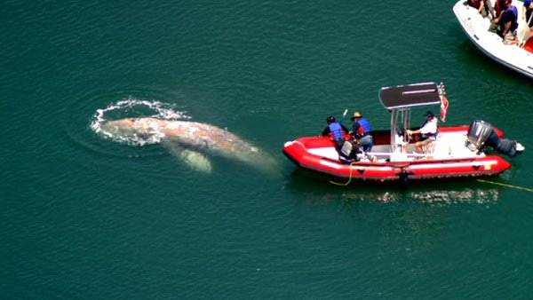 Click image for larger version  Name:100512_md_whale_01.jpg Views:241 Size:38.5 KB ID:51249