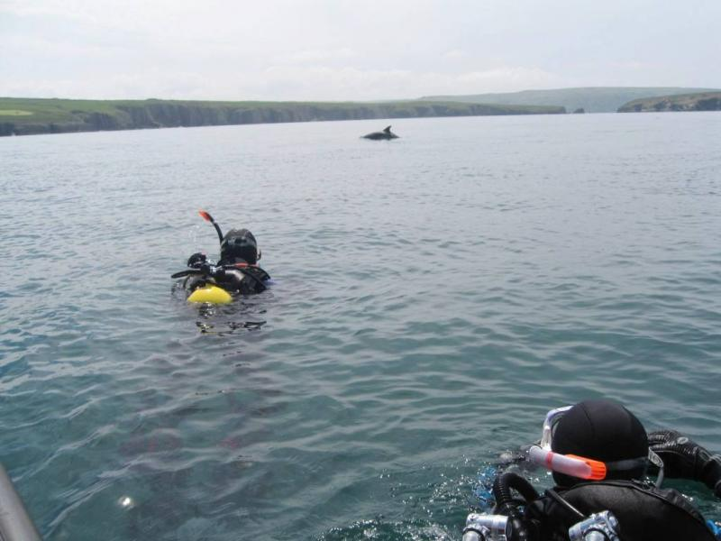 Click image for larger version  Name:Bnose with divers 6th June 2010 #2.jpg Views:125 Size:52.6 KB ID:51656