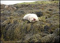 Click image for larger version  Name:Yawning seal.jpg Views:139 Size:118.4 KB ID:51940