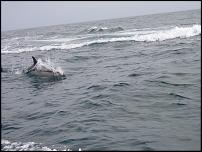 Click image for larger version  Name:Dolphins !.jpg Views:132 Size:58.4 KB ID:52359