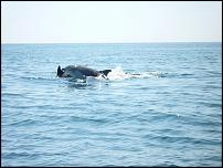 Click image for larger version  Name:dolphin.jpg Views:129 Size:52.5 KB ID:52397