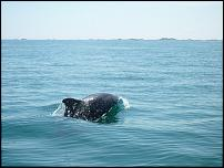 Click image for larger version  Name:dolphin2.jpg Views:128 Size:54.7 KB ID:52398