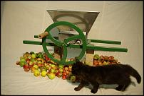 Click image for larger version  Name:kitten.jpg Views:134 Size:163.2 KB ID:53867