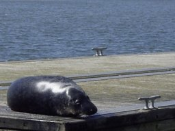 Click image for larger version  Name:SEAL1.JPG Views:479 Size:11.1 KB ID:5445