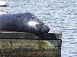 Click image for larger version  Name:SEAL4.JPG Views:483 Size:15.8 KB ID:5448