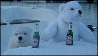 Click image for larger version  Name:polar bears 015.jpg Views:179 Size:30.1 KB ID:55011