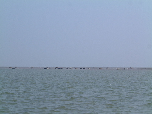 Click image for larger version  Name:seals.JPG Views:293 Size:52.1 KB ID:5695
